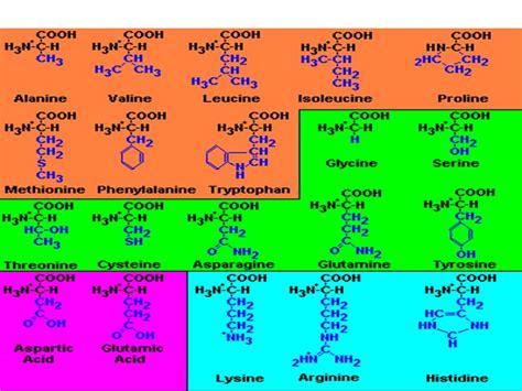 proteinas y aminoacidos bioquimica 2do a 209 o oficial amino 225 cidos y prote 237 nas