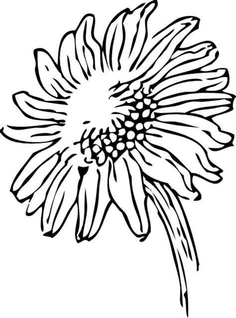 black and white sunflower tattoo clipart panda free