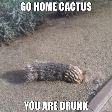 Cactus Meme go home cactus you are cactus quickmeme