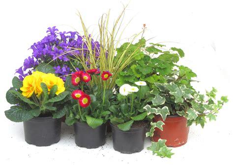 pflanzen garten katalog pflanzen versand kataloge pflanzen garten katalog