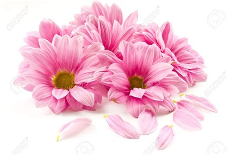 Flowers Pink pink flower picture 1300x866 hd wall