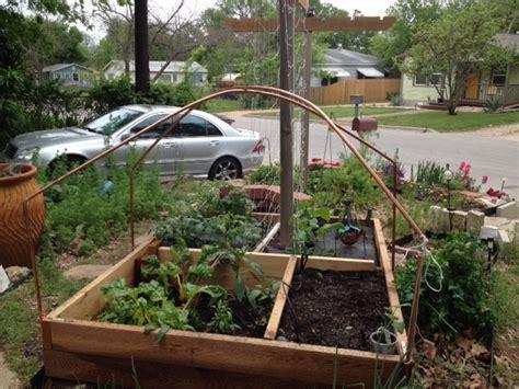 vegetable garden in front yard valente s front yard vegetable garden central