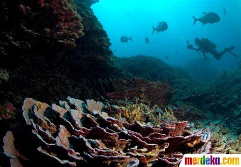 Indahnya Gan Gambar Foto gambar kehidupan dibawah dasar laut gambar indah di