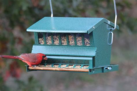 woodlink absolute squirrel resistant bird feeder model
