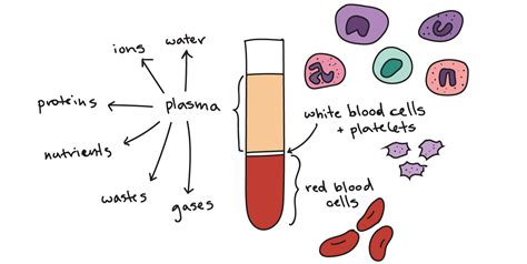 which blood component gives blood its color components of circulatory system fosfe