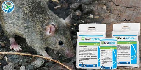 obat pembasmi kutu tikus dengan klerat jual pestisida