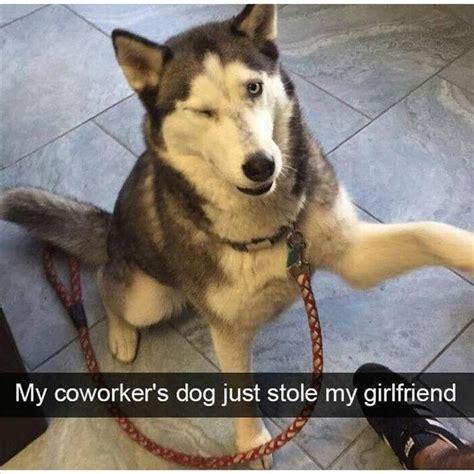 Dog Girlfriend Meme - best 25 funny coworker memes ideas on pinterest funny
