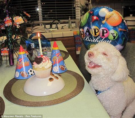 birthday puppy birthday your meme