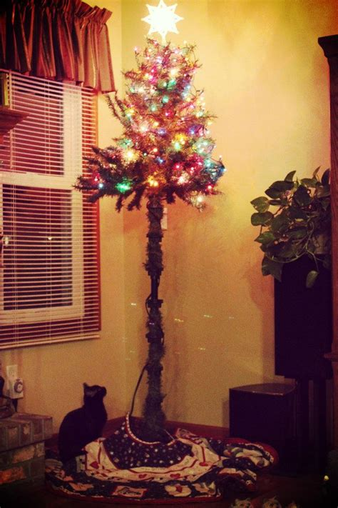 best to keep cats off the xmas tree 24 best cat proofing the tree images on trees tree and