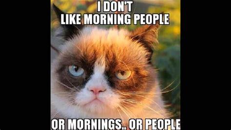 Katzen Meme - image gallery katzen meme