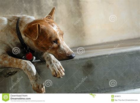 lonely puppy lonely royalty free stock photo image 5618675