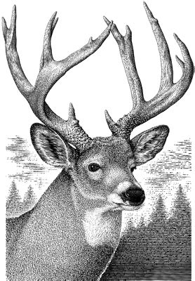 google images deer buck deer gif 278 215 400 laser engraving pinterest