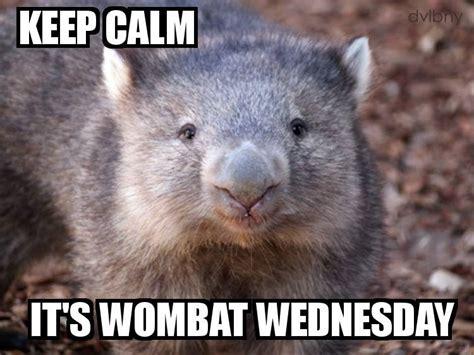 image gallery wombat meme