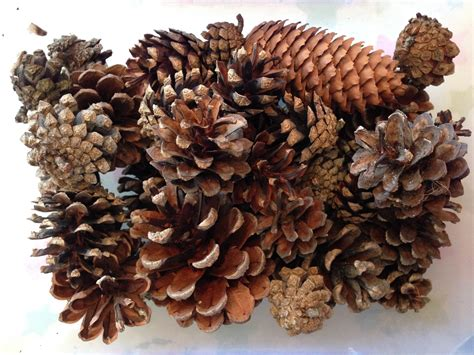 with pine cones pine cone spider pinaddicts challenge