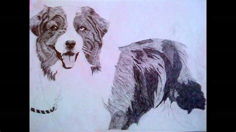 drawing  dog australian shepherd youtube