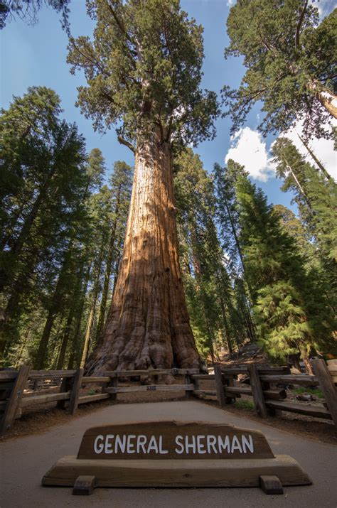 general sherman tree sequoia national park in california sequoia national park kevin s travel blog