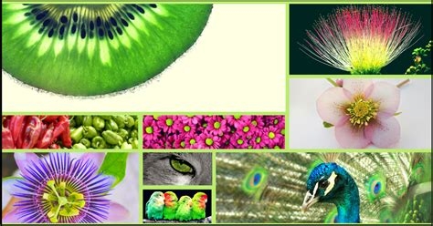 colors that go with green what color goes with lime green earth and moon design