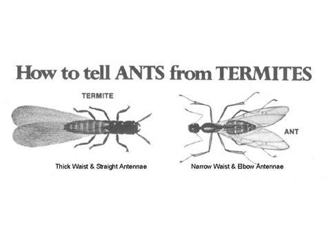ants  wings termites  carpenter ants