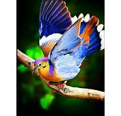 Rainbow Birds Colorful And Amazing Creatures  Incredible Cuteness