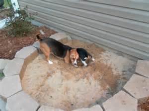Small Backyard Playground Share