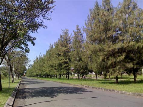 Pohon Pohonan Cemara Isi 4 panoramio photo of pohon cemara pondok candra