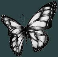 imagenes mariposas goticas mariposa oscura