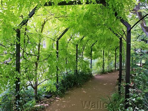 green japanese wallpaper green archway lush japanese garden wallpaper 3 wallcoo net