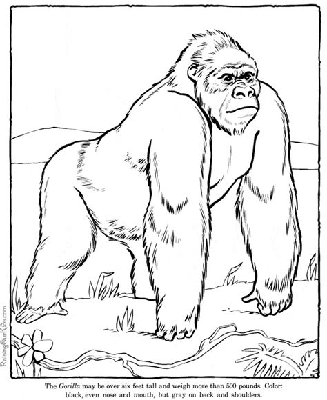 Rainforest Colouring Page Gorilla Coloring Page Animals Town Animals Color Sheet by Rainforest Colouring Page