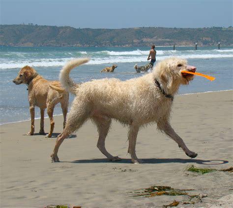 puppy san diego coronado san diego travel