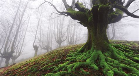 0008218439 the hidden life of trees review the hidden life of trees planet experts