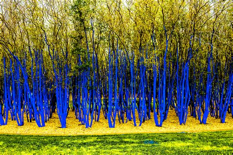 Trijee Blue project the blue trees codaworx