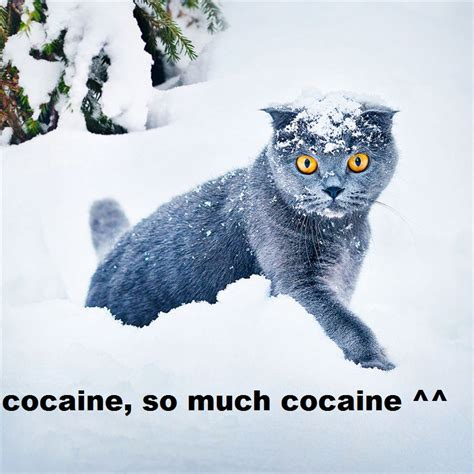 So Much Cocaine Meme - so much cocaine meme memes