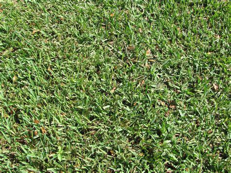 St Grass The 5 Best Grass Types For Tallahassee Fl Lawns Lawnstarter