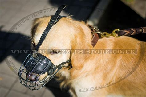 golden retriever muzzle muzzle for golden retiriever muzzle uk bestseller 163 28 35