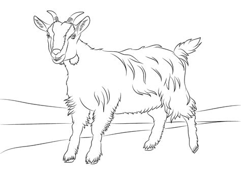goat coloring page printable free printable goat coloring pages for kids