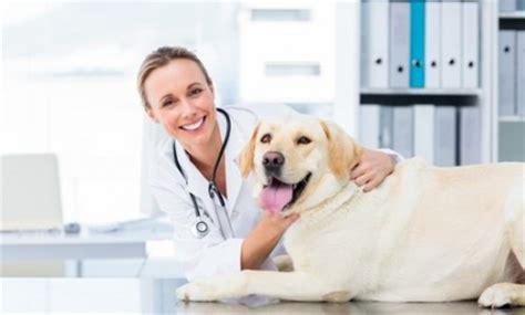imagenes de medicas veterinarias m 233 dico veterin 225 rio profiss 245 es infoescola
