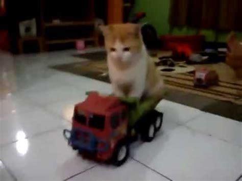Mainan Laser Untuk Kucing ha ha ha ha kocak kucing naik truk