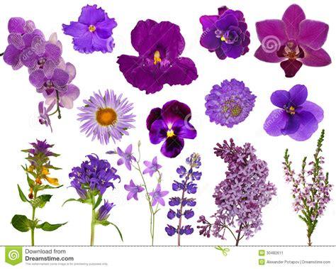 imagenes de lilas blancas sistema de flores del color de la lila aisladas en blanco