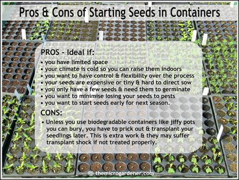 seed starting guide quick tips for starting seeds