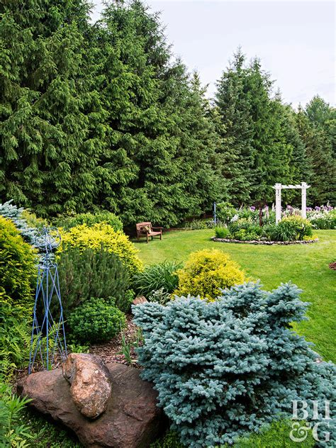 outstanding evergreen trees  privacy  homes