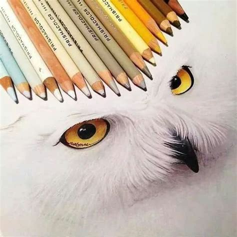 dibujos realistas illustrator 59 best images about dibujos realistas on pinterest