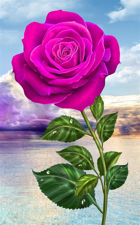 google wallpaper rose rose magic touch flowers android apps on google play