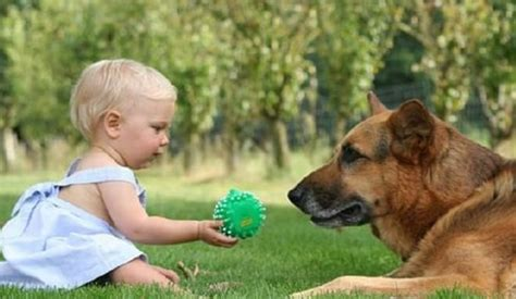 how do dogs babies brain scans reveal what dogs really think of us the tech journal