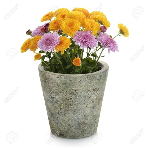 images of 6 flowers in pots flower pot part 1 weneedfun