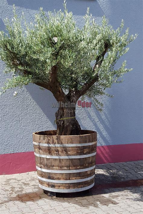 garten pflanzen shop fassstolz 174 pflanzen deko 183 fassm 246 bel 183 garten f 228 sser shop