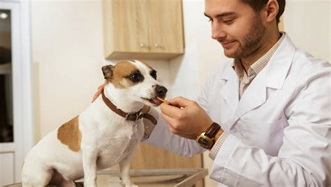 puppy food recipes vet approved which treats do veterinarians recommend and why