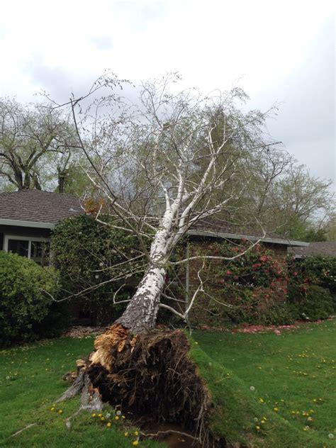 service sacramento timberland tree care ohio beatiful tree