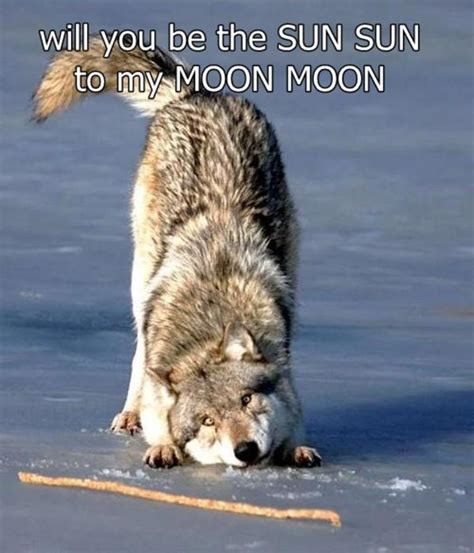 Moon Moon Meme - image 534602 moon moon know your meme
