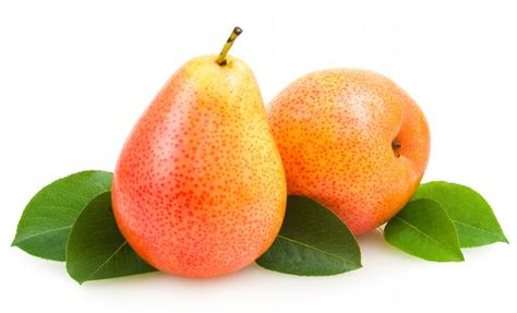 images of fruit pear fruit photos elsoar