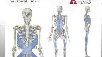cadenas musculares espiral cadenas miofasciales youtube